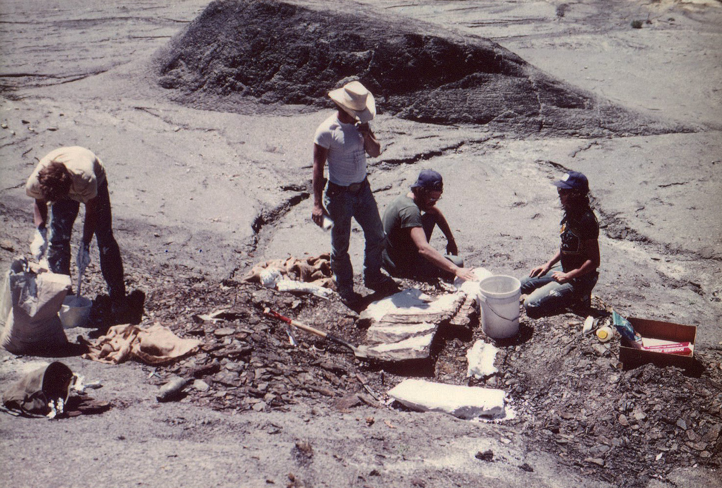 Collecting giant Cretaceous fish